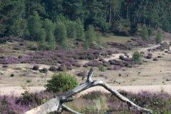 heather Immagini Stock