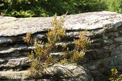 heather Royalty-vrije Stock Foto