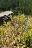 heather Stock Foto's