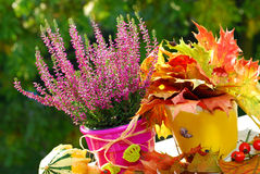 Heather in autumn garden Stock Photo