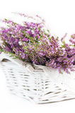 Heather in the basket Stock Photography