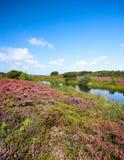 heather bloom zdjęcia royalty free