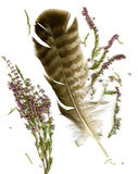 Heather bouquet and falcon plume Royalty Free Stock Photo