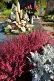 Heather callung as planting on a grave at all saints day Stock Photo