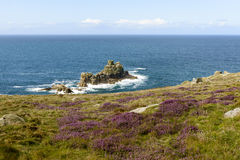 Heather and cliffs at Land End, Cornwall Royalty Free Stock Image