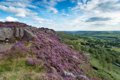 Heather at Curbar Edge. In the Peak District National Park in Derbyshire stock photos