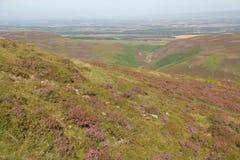 Heather en collines de Pentland près d'Edimbourg, Ecosse Images stock