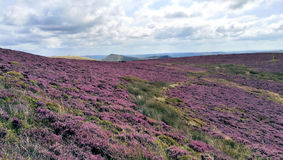 Heather Field Images stock