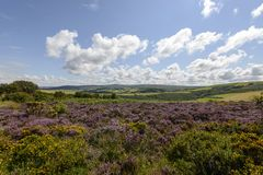 Heather field and hilly countryside, Exmoor Stock Photos