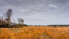 Heather Fields in Autumn. Near the town of Ermelo in the Netherlands Royalty Free Stock Image