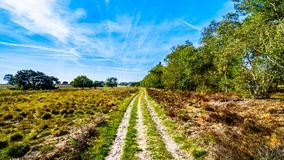 The heather fields and forests in the Hoge Veluwe nature reserve. In Gelderland province in Netherlands royalty free stock images