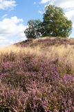 Heather and Grave Mound. In Germany Stock Photos