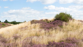 Heather and Grave Mound. In Germany Royalty Free Stock Images