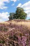 Heather and Grave Mound. In Germany Royalty Free Stock Photos
