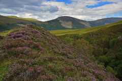 Heather hills of Scotland Royalty Free Stock Photo