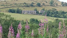 Heather and Houses. Peak District scenery Royalty Free Stock Images
