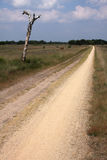 Heather landscape. Dry heather landscape with a sandy road Royalty Free Stock Photos