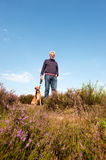 Heather landscape. Purple heather landscape with an elderly man and his dog Royalty Free Stock Images