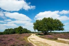 Heather landscape Stock Image