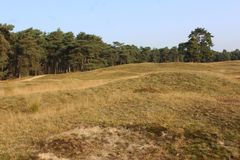 Heather landscape in autumn, National park Utrechtse heuvelrug in the Netherlands. Heather landscape in the utrechtse heuvelrug during autumn season in the Stock Photo