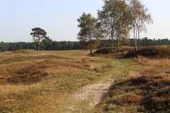 Heather landscape in autumn, National park Utrechtse heuvelrug in the Netherlands. Heather landscape in the utrechtse heuvelrug during autumn season in the Royalty Free Stock Photography