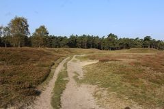 Heather landscape in autumn, National park Utrechtse heuvelrug in the Netherlands. Heather landscape in the utrechtse heuvelrug during autumn season in the Royalty Free Stock Image
