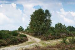 Heather Landscape con dos pistas de senderismo y árboles de abedul Foto de archivo