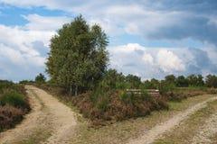 Heather Landscape con dos pistas de senderismo y árboles de abedul Imágenes de archivo libres de regalías