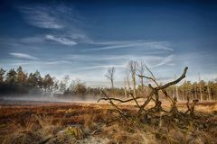 Heather landscape. Early morning over the heather landscape in Hoog Buurlo, Gelderland, the Netherlands with the remmanant of a tree as the only reminder of the Royalty Free Stock Image