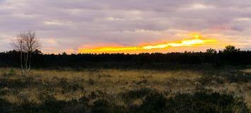 Heather landscape with the forest in the horizon at sunset, sundown giving a colorful effect in the sky and clouds royalty free stock photo