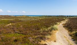 Heather landscape on the island Sylt Royalty Free Stock Images