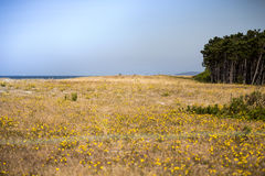 Heather landscape. With ocean an forest Stock Image