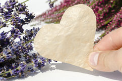 Heather and lavender  flowers on white background with copy spac Stock Photos
