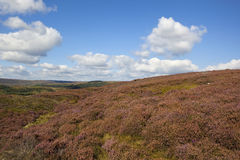 Heather moorland Stock Image