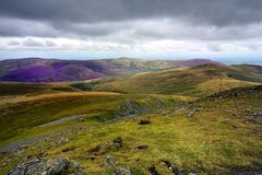 Heather on the Northern Fells. Purple heather on the Northern Fells Stock Photography