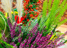 Heather, ornamental grasses, fire thorn Royalty Free Stock Photos