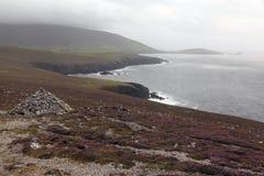 Heather rocks on the irish coast. In Dunquin on Dingle peninsula in Ireland Stock Images