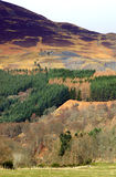 Heather and Scottish Highlands Stock Image
