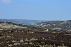 Heather selvaggia e Moorland che si rivoltano le colline dell'Inghilterra immagine stock libera da diritti