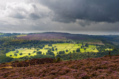 Heather sur un Derbyshire Hillside Photographie stock
