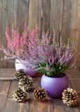 Heathers in ceramic pots and cones Stock Images