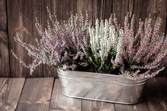 Heathers in a metal flowerpot on wooden boards Royalty Free Stock Photo