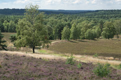 Heathland Stock Image