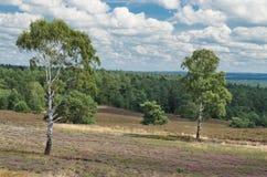 Heathland Стоковое Изображение