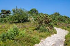 Heathland at Arne in Dorset. Gravel Path Across Heathland at Arne in Dorset Stock Photo