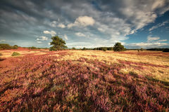 Heathland and beautiful sky Stock Images