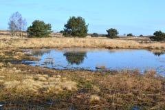 Heathland field Royalty Free Stock Photos