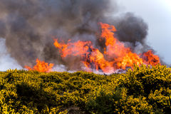 Heathland fire Stock Image