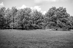 Heathland with flowering common heather. Calluna vulgaris and an oak in the Lueneburg Heath Lueneburger Heide in Lower Saxony, Germany. Autumn field and meadow Stock Photo