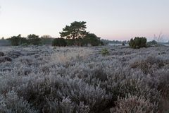 Heathland and forest in the early morning with fog Stock Photos